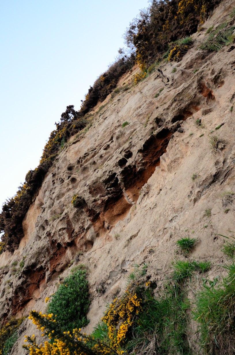 Shanklin Cliffside